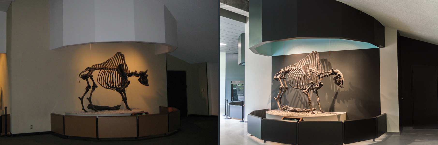 Bison wall — Before | after renovation
